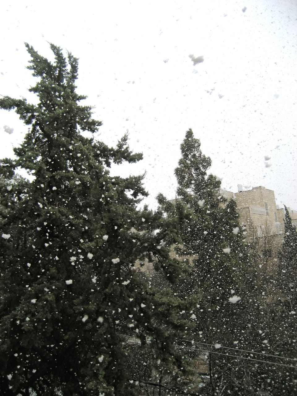 Monster Jerusalem Snow Flakes