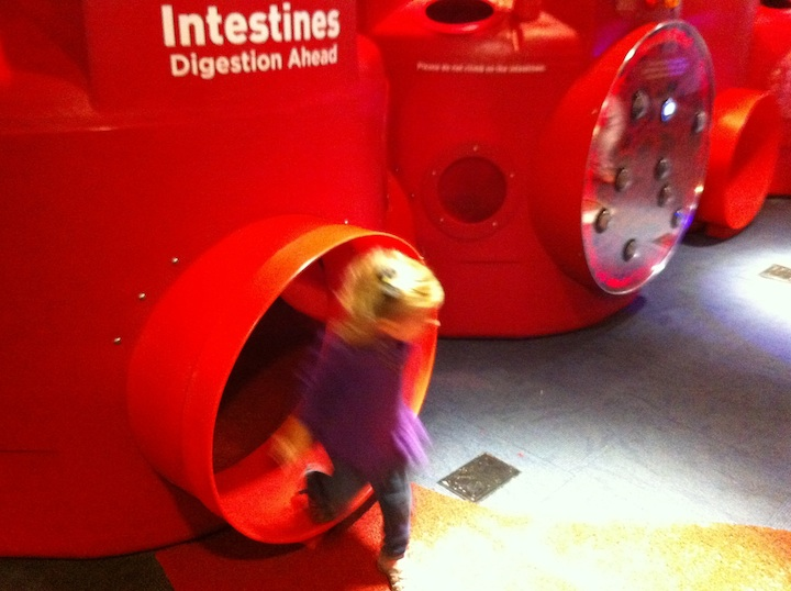 intestines1